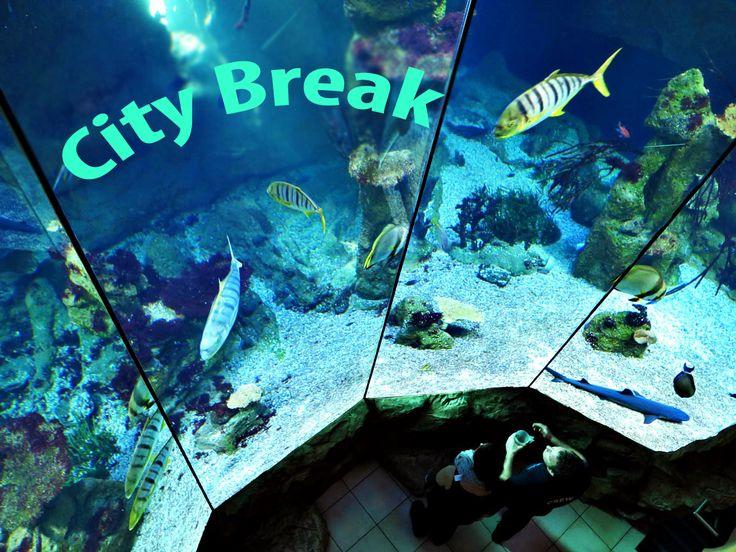 *** CITY BREAK *** Expozitia Aquarium din Viena are peste 3500 de specii acvatice vii si a fost infiintata in urma unei initiative private pe o suprafata de peste 6000 de metri patrati. http://goo.gl/8uAF8z