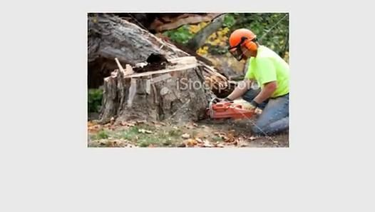 Bay Area Tree Specialists 490 S. California Ave, Palo Alto, CA 94036 (650) 353-5671 http://bayareatreespecialists.com/