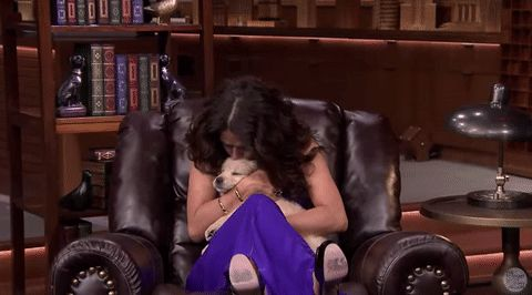 puppy fallontonight salma hayek latina latino people hispanic people hispanic heritage month the tonight show starring jimmy fallon latinawomen #humor #hilarious #funny #lol #rofl #lmao #memes #cute