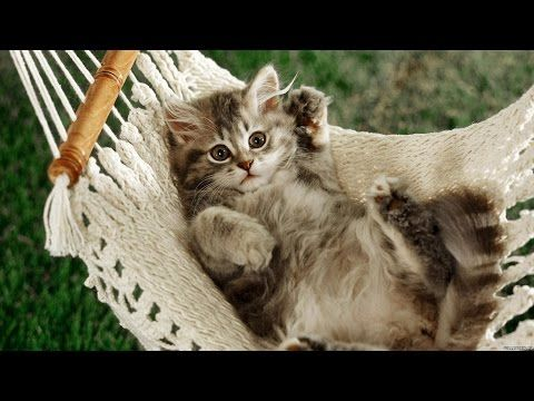 Funny Cat & Cute Kittens Fail Videos - The Best Funny Kitty Cat Video № 15 | Morsomme Katter № 15 - http://positivelifemagazine.com/funny-cat-cute-kittens-fail-videos-the-best-funny-kitty-cat-video-%e2%84%96-15-morsomme-katter-%e2%84%96-15/ http://img.youtube.com/vi/bMH0WAMZai4/0.jpg                                             Subscribe to channel : https://www.youtube.com/channel/UCnDkX48JBPury_qDGXyFCmw.    source                                   Please follo