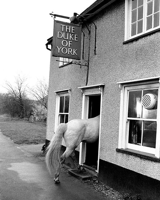 John Drysdale animal photographs – Pub Stop, 1974: