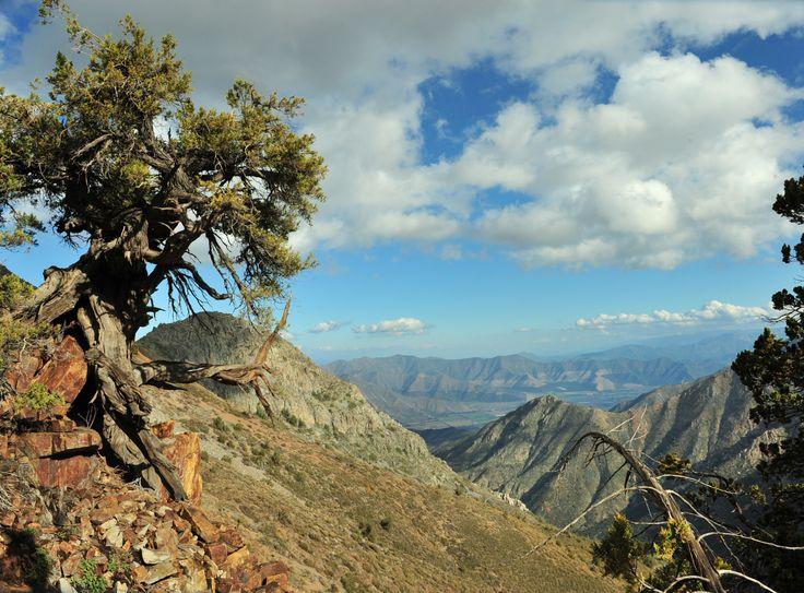 Vista del Valle con un Cipres milenario...  Zona declarada  santuario de la Naturaleza, la cual te invitamos a visitarla con nosotros