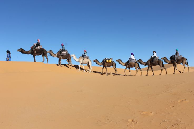 Morocco Camel Trekking takes you straight into the Moroccan Sahara region where there is nothing around you and all you can hear are the footsteps of the camels on the sand.