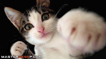 Cute cat videos http://www.cekatvvideo.com/