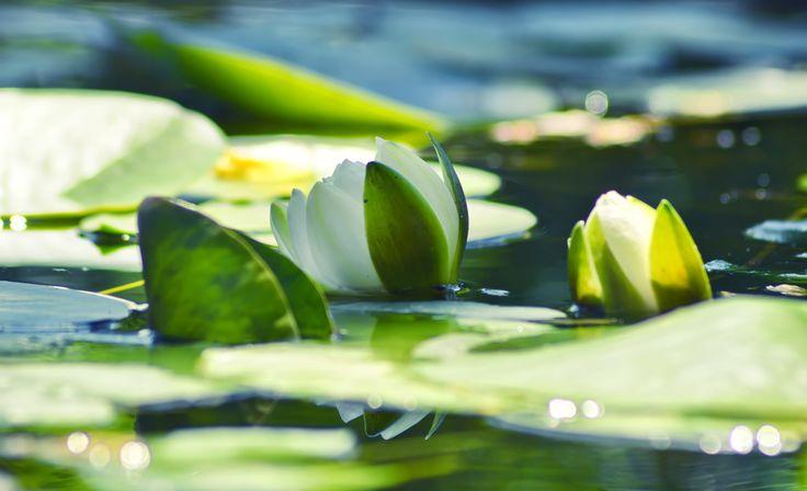 Lélek Napja – díjtalan – Fesztiválok – Sri Chinmoy Alapítvány | Sri Chinmoy tanítására épülő fesztiválok. Előadások, koncertek, meditáció, videó, büfé és sok más… Szívet betöltő, lelket emelő!
