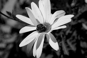 """Colección """"El jardín de los colores"""" Y es así como el misterio de la vida se revela, una delicada flor con su belleza majestuosa con sus suaves pétalos y su característico aroma, cautivando con su simpleza y a la vez con su complejidad… la vida misma encarnada en esta realidad.(#Rouse)"""