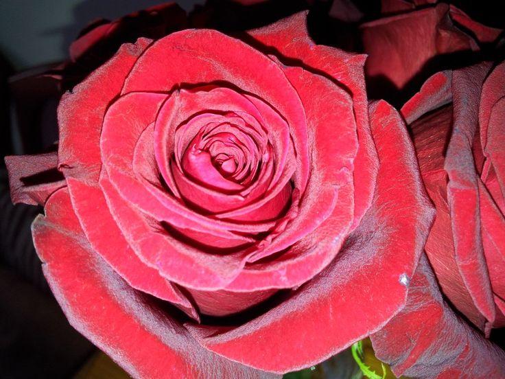 Elegante rosa...