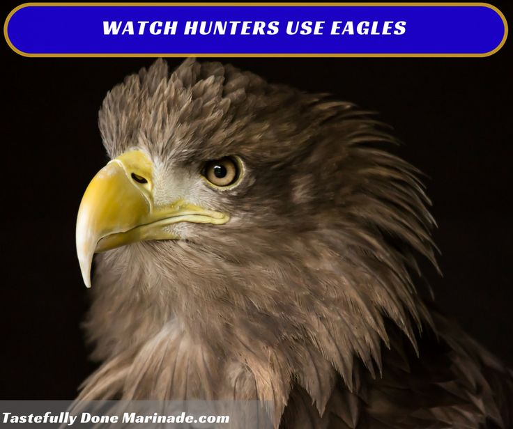 #Hunting with a bow is respectable. Try #hunting with a #raptor as your #weapon though! See here