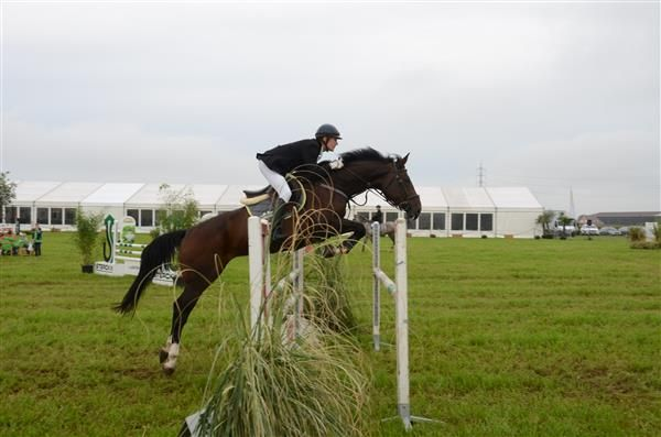 Pferde zu verkaufen: Héloise van't Hoogwielke