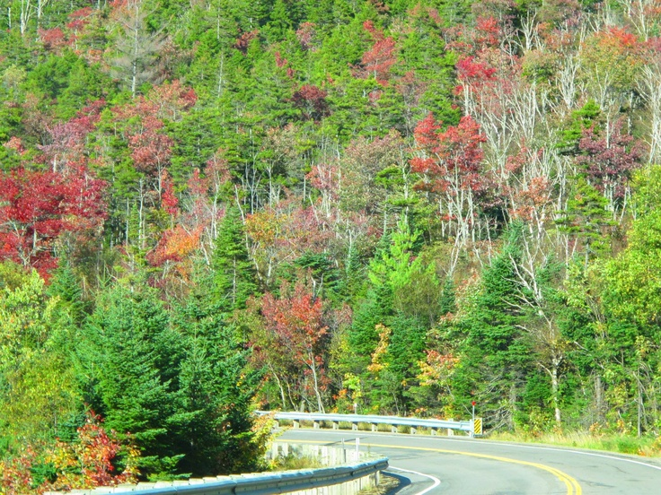 Foliage on the Kancamagus Highway in New Hampshire 9/19, courtesy Ellen Edersheim.: Work, England Style, Courtesi Ellen, Favorite Places, Fall Foliage, Hampshire, Ellen Edersheim, Kancamagus Highway, Fall Travel
