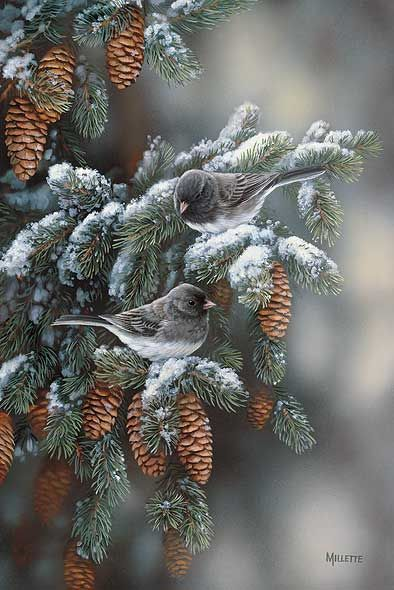 Winter Gems-Juncos by Rosemary Millette