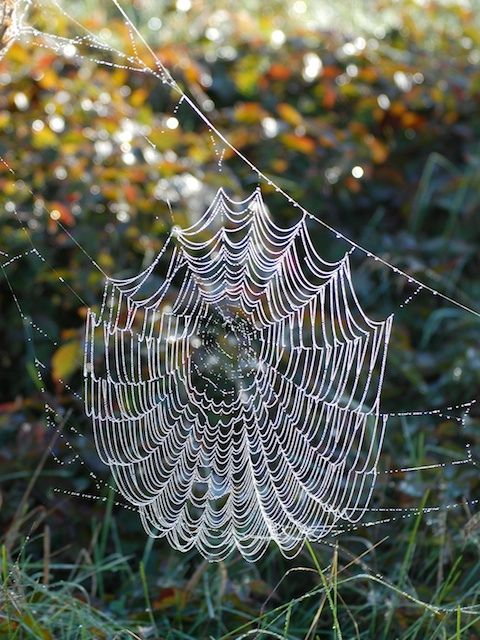I love dew covered spider web