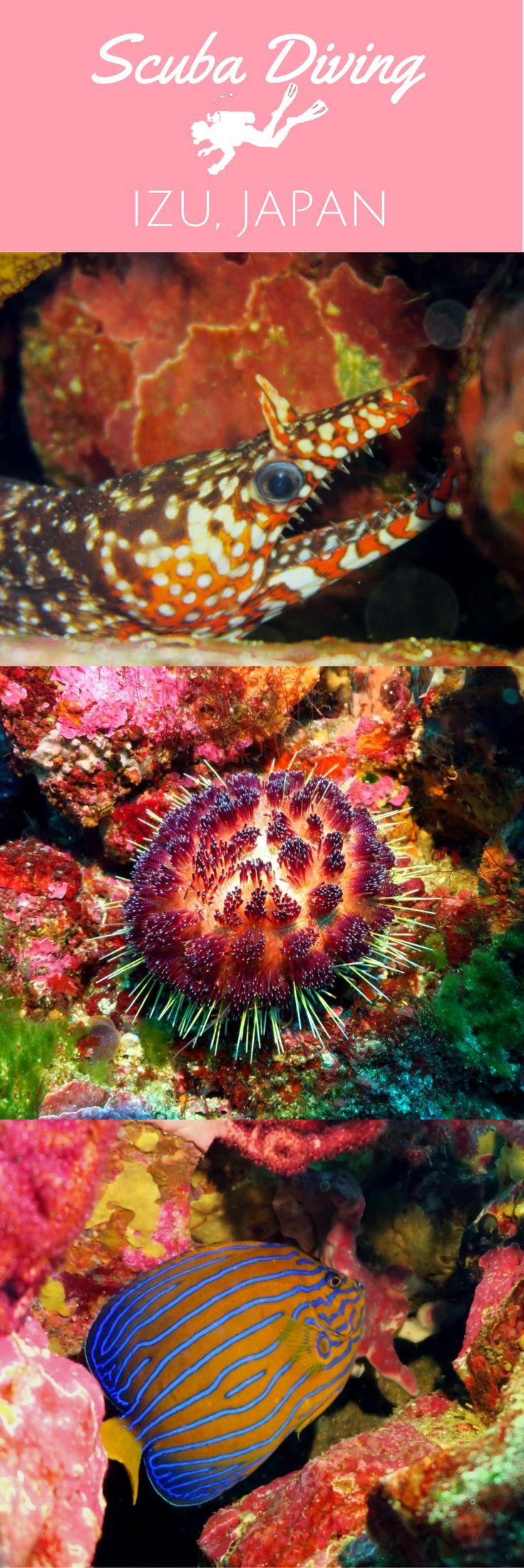 Scuba diving in Izu Ocean Park near Tokyo, Japan - World Adventure Divers - read more on https://worldadventuredivers.com/2017/02/22/scuba-diving-tokyo-to-izu-japan/