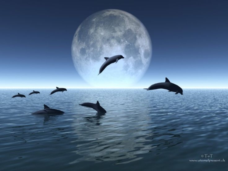 Dolphins, moon, ocean... love it! :)                                                                                                                                                                                 More