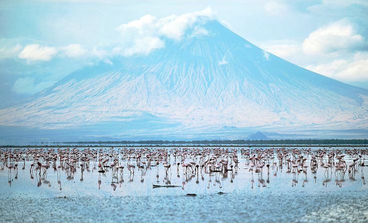 Lake Natron, became famous on the Internet in October because of the work of artist Nick Brandt, who took some eerie, posed photos of the ca...