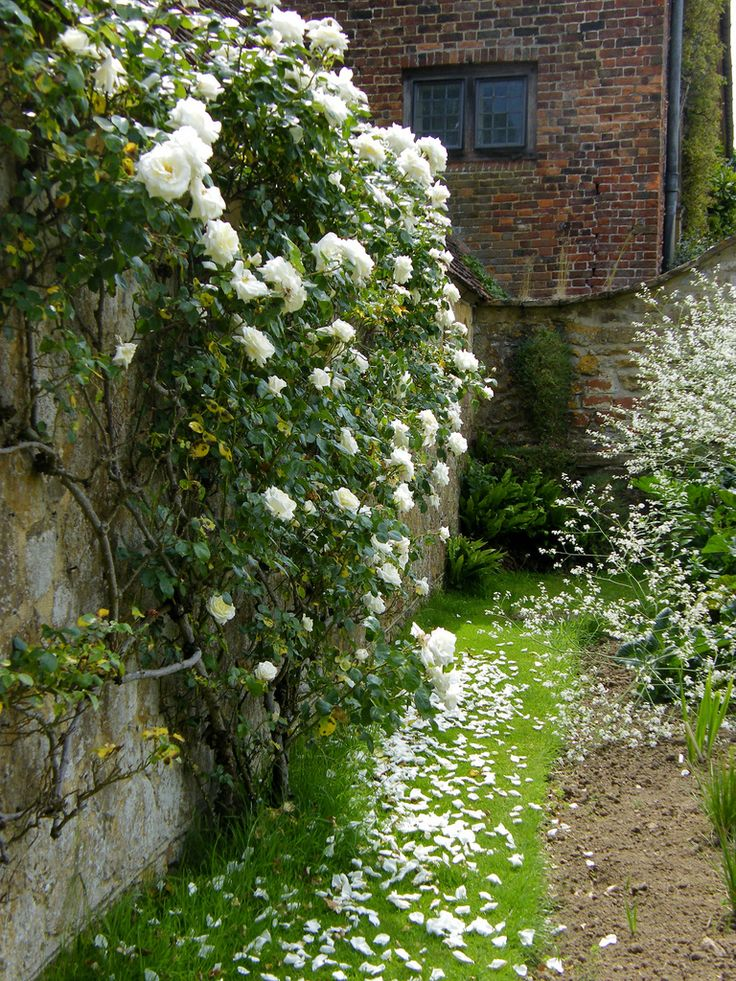 """White walled garden....I want a """"moonlite garden"""" all white flowers that blooom or open at night"""