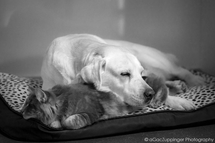 FRIENDS :: #cat #dog