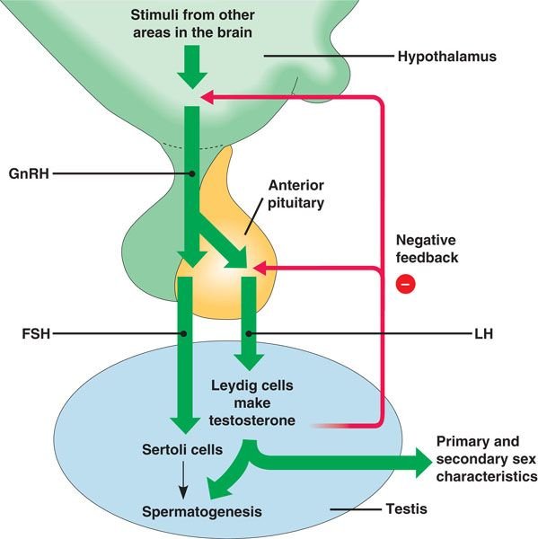 a person who is unable to synthesise antidiuretic hormone Arginine vasopressin (avp), also known as vasopressin, argipressin or antidiuretic hormone (adh),  13 people found this useful.