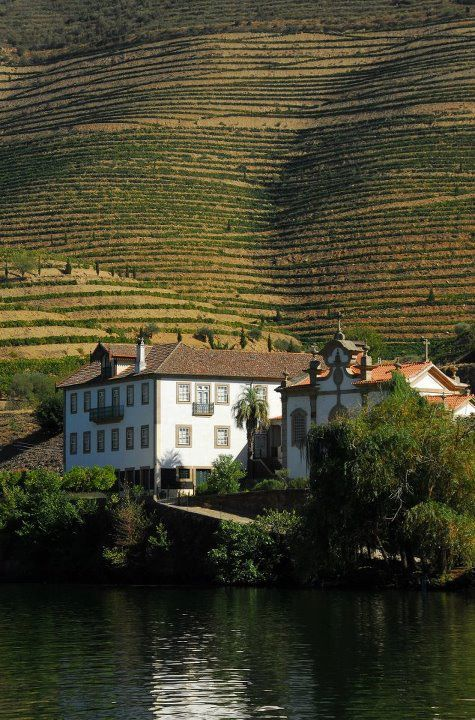Douro Valley - Port Wine - Portugal. There is port wine that is only available in Portugal that is of higher quality and more delicious than anything available to us.