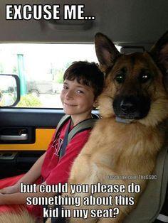 Please, do something #german #shepherd