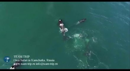 "Katil balinalar, balinayı böyle yedi!  ""Katil balinalar, balinayı böyle yedi!"" http://fmedya.com/katil-balinalar-balinayi-boyle-yedi-h49549.html"