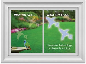 Unique Birds Flying Into Windows Ideas On Pinterest Colorful - Window decals for birds canada
