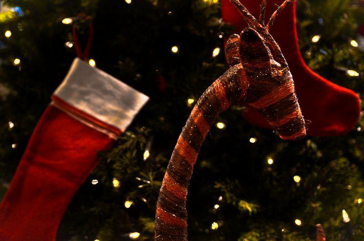 Reindeer Christmas by Pierre-Etienne Jlt on 500px