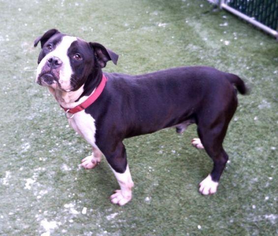 Oreo Shake 161919 With Images Oreo Shake Dog Life Hacks Animal Help