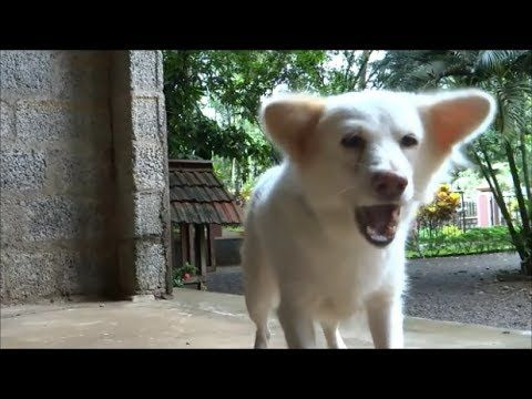 """""""Dog barking sounds -  Nonstop 5 hours video - Very loud dog bark sound e..."""" Hmm, maybe something to leave playing as burglar deterrent while out of the house."""