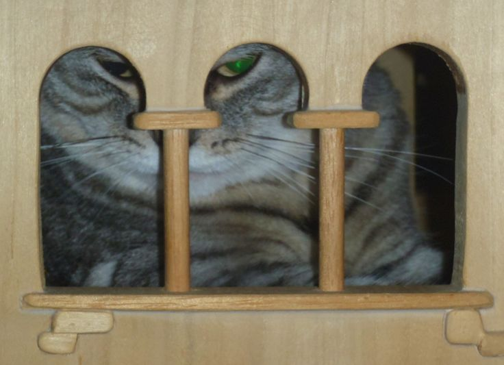 DomusfeliS - special playzones for cats #catcastle #cattower #catcondo #felinelovers #catenclosure