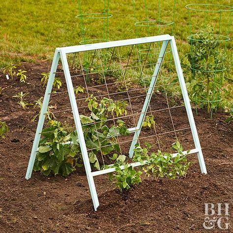 Create a vertical vegetable garden to give your produce something to lean on.