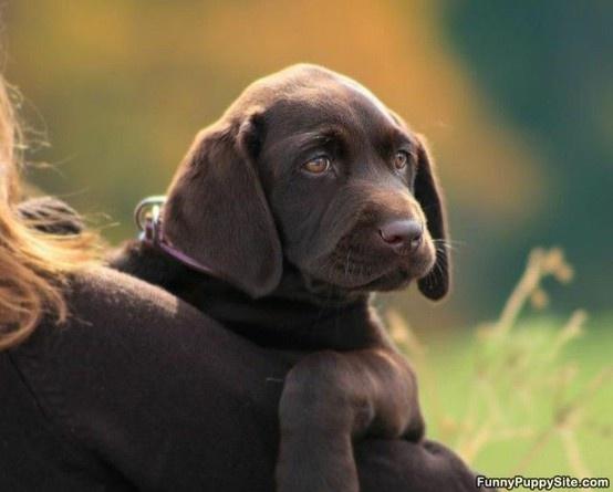 beautiful puppy face