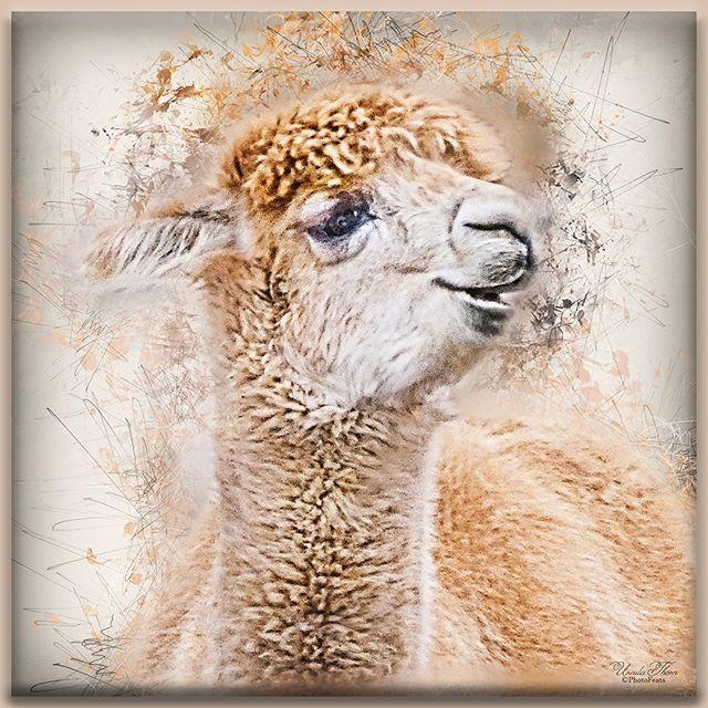 Alpaca From A Photo Taken At The Zoo Textureart Artofvisuals Awesome Photographers Texturedphotography Grunge Ditgalphotog In 2020 Texture Art Photo Art Photo