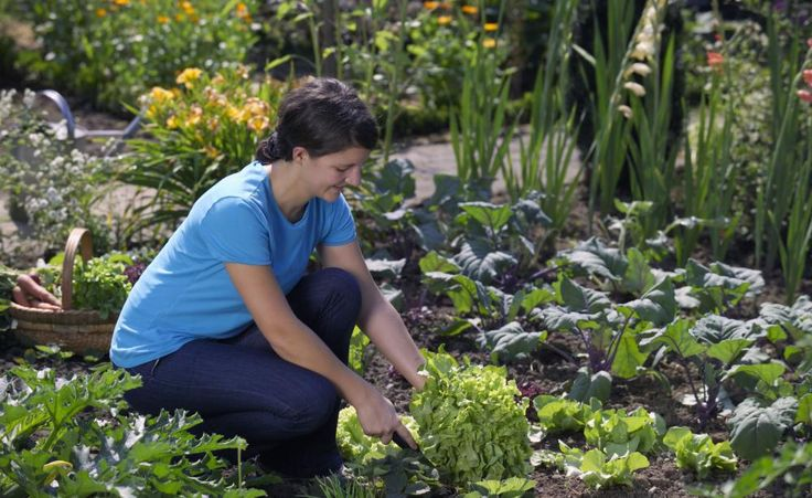 47 best d ngen images on pinterest plants compost and flowers. Black Bedroom Furniture Sets. Home Design Ideas