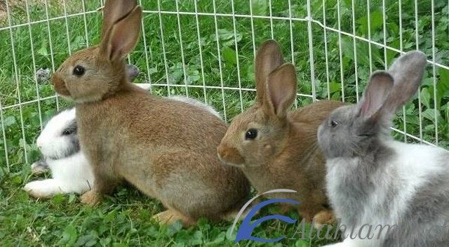 تفسير حلم الأرنب في المنام للعصيمي الأرنب الأرنب في الحلم الأرنب في المنام تفسير العصيمي Cool Pets Pets Rabbit