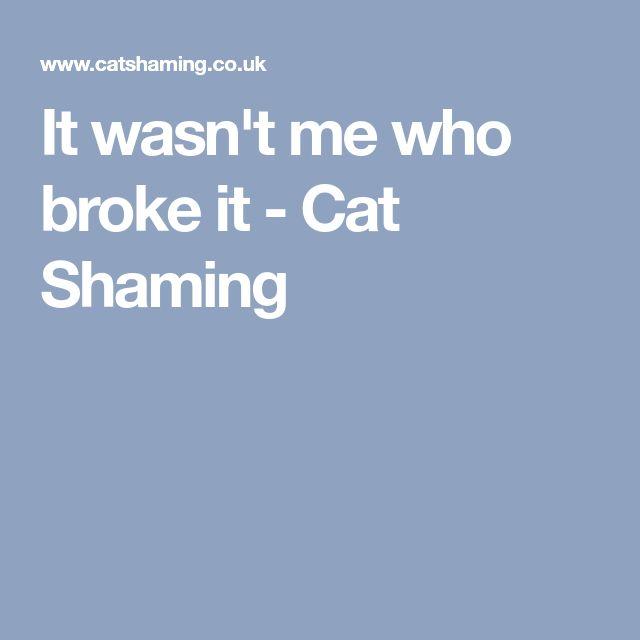 It wasn't me who broke it - Cat Shaming