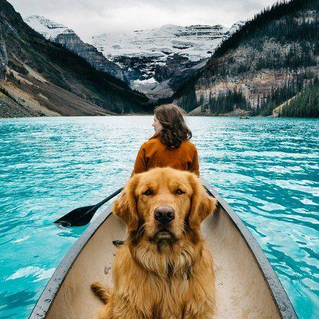 A négyéves, coloradói golden retriever, Aspen fotós gazdájával, Hunter Lawrence-szel járja a világot.