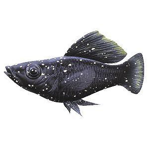 Aquarium Fish Diseases and How to Spot Them   Tetra Aquarium
