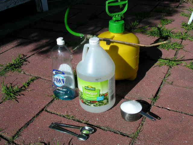 DIY weed spray - 1 gallon vinegar - 1 cup salt  - 2 tbsp dishwashing liquid - spray bottle - optional: 2 oz rubbing alcohol