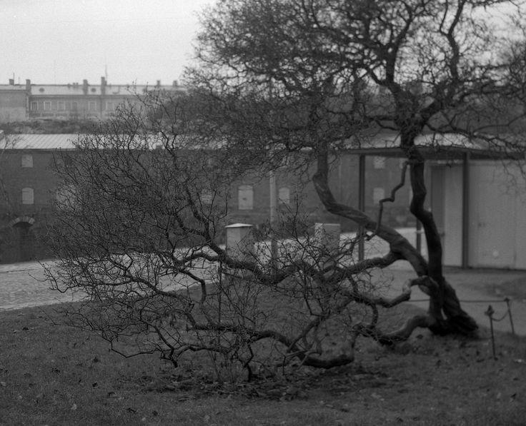 2014_Nov_Suomenlinna-Sveaborg_Graflex-Calumet-6x7_Ektar-101mm_003