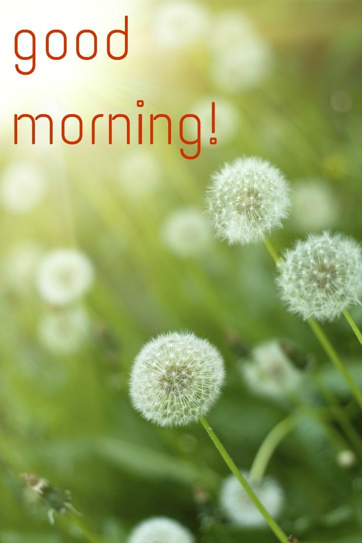 34 Good Morning Cards to Make your Day! | Birthday Wishes Expert