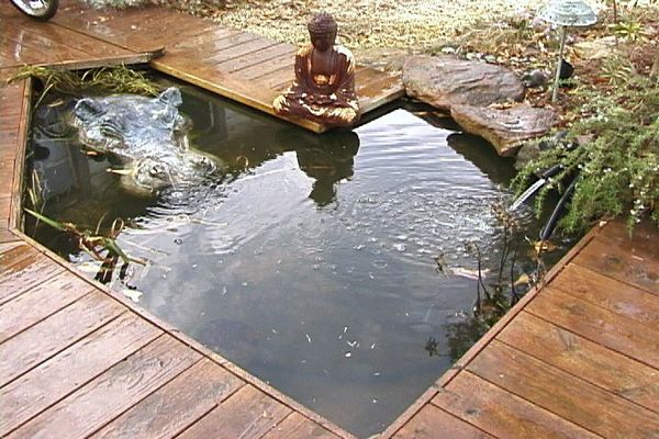 57 best a koi matey images on pinterest for Koi pond builders sydney