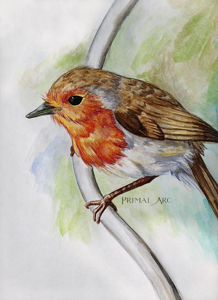 'European Robin Study', watercolour. www.primalarc.com