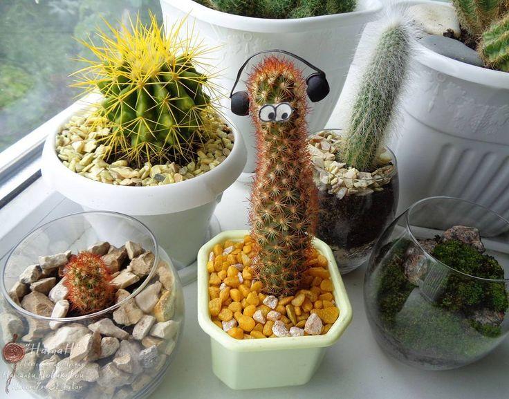 Солнечное селфи с кактусиным семейством! _____  #кактусГеннадий #кактус #cactus #cactusGennady