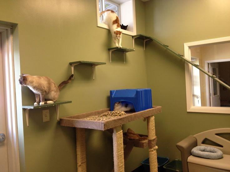 Cat Room Design Ideas Part - 20: Http://animalharbor.com/resources/Cat%20room%202015-09-05%20smaller.jpg    Free Roaming Cat Room Ideas   Pinterest   Cat