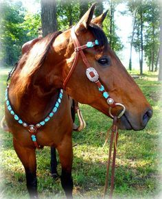 brown horse tack - Google Search