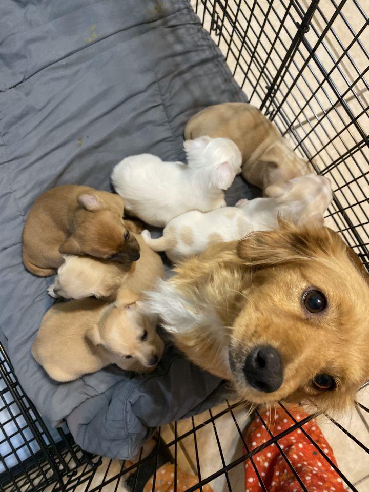 Adopt Josie On In 2020 Help Homeless Pets Dog Adoption