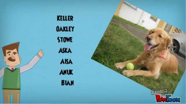 Mira nombres originales para perros hembras