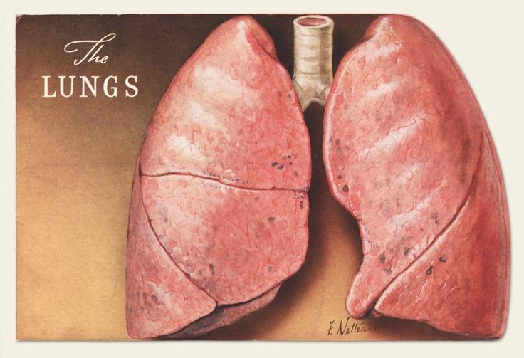 "1938 CIBA Pharmaceutical ""Lungs"" brochure"