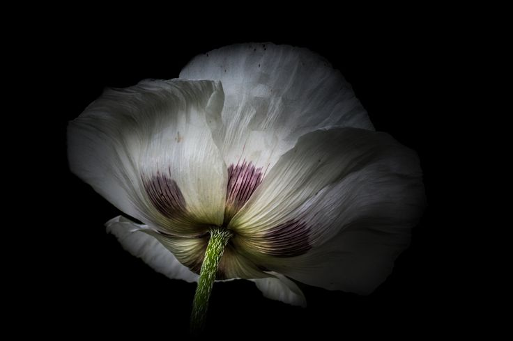 Photograph Without The Dark There Is No Light by Paul Barson on 500px